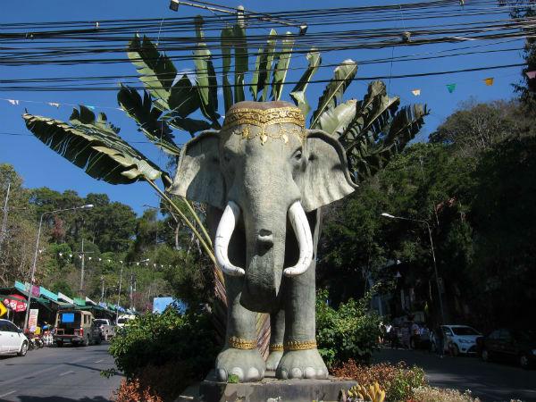 slon chiang mai impleo tomáš procházka