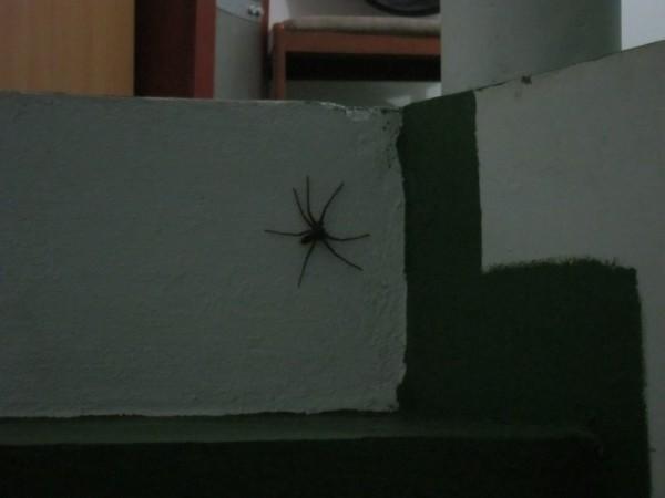 spider pavouci Filipíny Mindoro