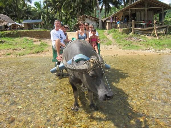 vodní buvol Mindoro