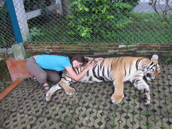 tiger kingdom chiang mai adela sestakova