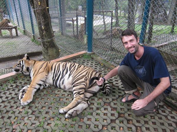 tiger kingdom chiang mai tomas prochazka