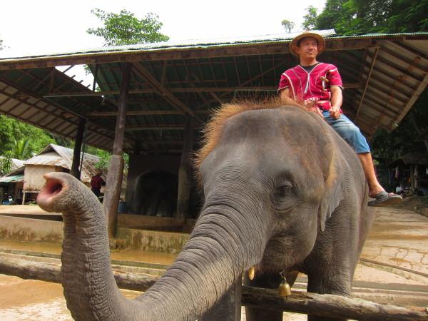 mae sa elephant chiang mai
